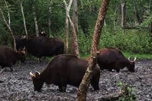 khaling-wildlife